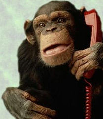 monkeyphone.jpg
